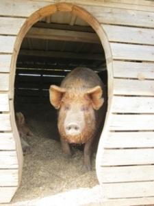 Pig chalet